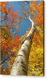 Canadian Autumn Acrylic Print by Mircea Costina Photography