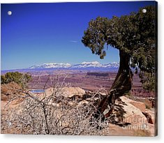 Canyonlands 4 Acrylic Print by Marty Koch