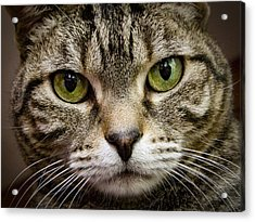 Cat Face Acrylic Print by Jean Noren