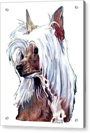 Chinese Crested Acrylic Print by Kathleen Sepulveda