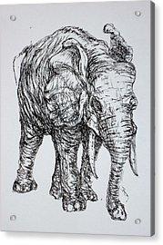 Elephant Acrylic Print by Pete Maier