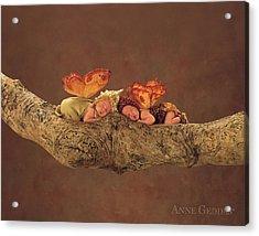 Fairies Acrylic Print by Anne Geddes