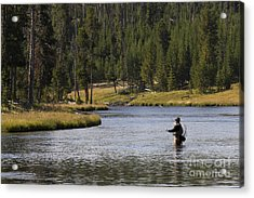 Fly Fishing In The Firehole River Yellowstone Acrylic Print by Dustin K Ryan