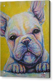 French Bulldog Acrylic Print by Jack No War