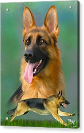 German Shepherd Breed Art Acrylic Print by Becky Herrera