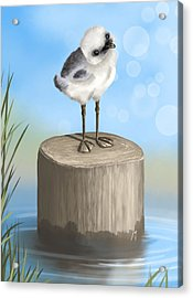 Good Morning Acrylic Print by Veronica Minozzi