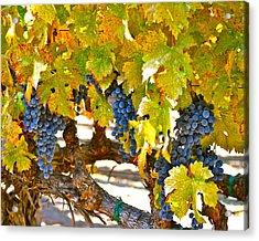 Grapes Acrylic Print by Dorota Nowak