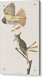 Great Crested Flycatcher Acrylic Print by John James Audubon