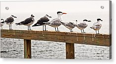 Grounded By Fog Acrylic Print by Christopher Holmes
