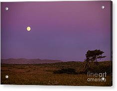 Harvest Moon Over Bodega Bay Acrylic Print by Diane Diederich