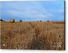 Harvest Acrylic Print by Stephen Smith