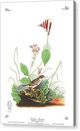 Henslow's Bunting  Acrylic Print by John James Audubon