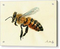 Honey Bee Watercolor Painting Acrylic Print by Juan  Bosco