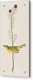 Hooded Warbler Acrylic Print by John James Audubon