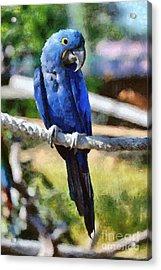 Hyacinth Macaw Acrylic Print by George Atsametakis