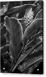 I See You Acrylic Print by Jon Glaser