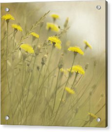 In The Mist Acrylic Print by Rebecca Cozart