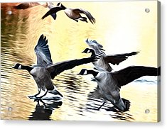 Landing Acrylic Print by Andrew Michael
