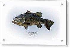 Largemouth Bass Acrylic Print by Ralph Martens
