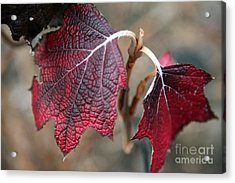 Leaves Acrylic Print by Amanda Barcon