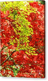 Leaves Acrylic Print by HD Connelly