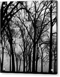 Leta Acrylic Print by Ken Walker