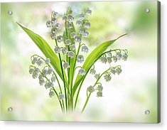 Lily Of The Valley Acrylic Print by Jacky Parker