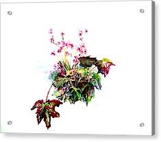 Linda Begonia Acrylic Print by Mindy Newman