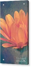 Little Flower Acrylic Print by Angela Doelling AD DESIGN Photo and PhotoArt