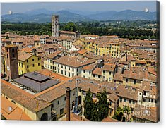 Lucca Italy Acrylic Print by Edward Fielding