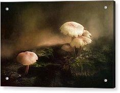Magic Mushrooms Acrylic Print by Scott Norris