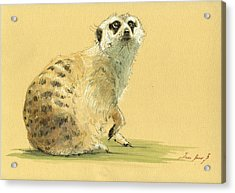 Meerkat Or Suricate Painting Acrylic Print by Juan  Bosco