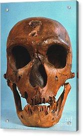 Neanderthal Skull Acrylic Print by Granger