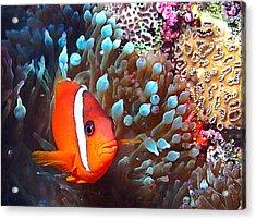 Nemo Acrylic Print by Jean Noren