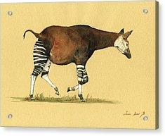 Okapi Art Watercolor Painting Acrylic Print by Juan  Bosco