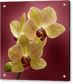 Orchid Acrylic Print by Sandy Keeton
