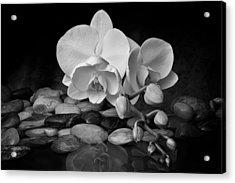 Orchid - Sensuous Virtue Acrylic Print by Tom Mc Nemar