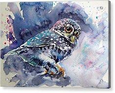 Owl At Night Acrylic Print by Kovacs Anna Brigitta