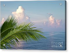 Palm And Ocean Acrylic Print by Blink Images