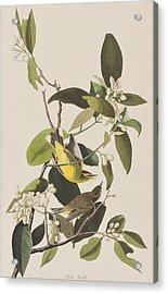 Palm Warbler Acrylic Print by John James Audubon