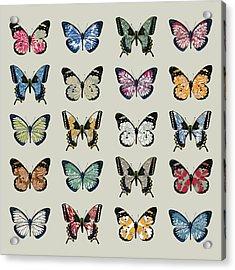 Papillon Acrylic Print by Sarah Hough