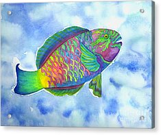 Parrotfish Acrylic Print by Lucy Arnold