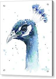 Peacock Watercolor Acrylic Print by Olga Shvartsur