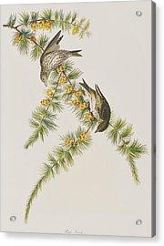 Pine Finch Acrylic Print by John James Audubon
