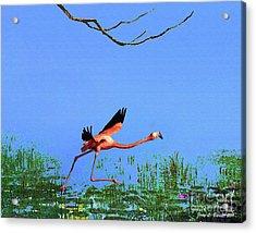 Pink Flamingo Acrylic Print by Jerry L Barrett