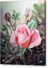 Pink Rose With Dew Drops Acrylic Print by Irina Sztukowski