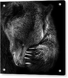 Portrait Of Bear In Black And White Acrylic Print by Lukas Holas
