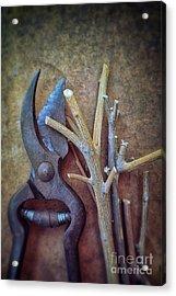 Pruning Scissors Acrylic Print by Carlos Caetano