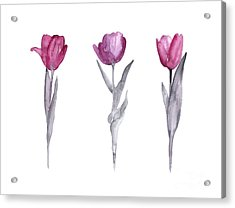 Purple Tulips Watercolor Painting Acrylic Print by Joanna Szmerdt