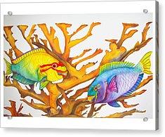 Queen Parrotfish And Elkhorn Coral Acrylic Print by Brenda Tucker